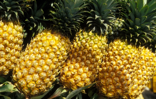 Ripe Phuket Pineapple