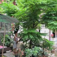 Taling Pling Tree – CucumberTree