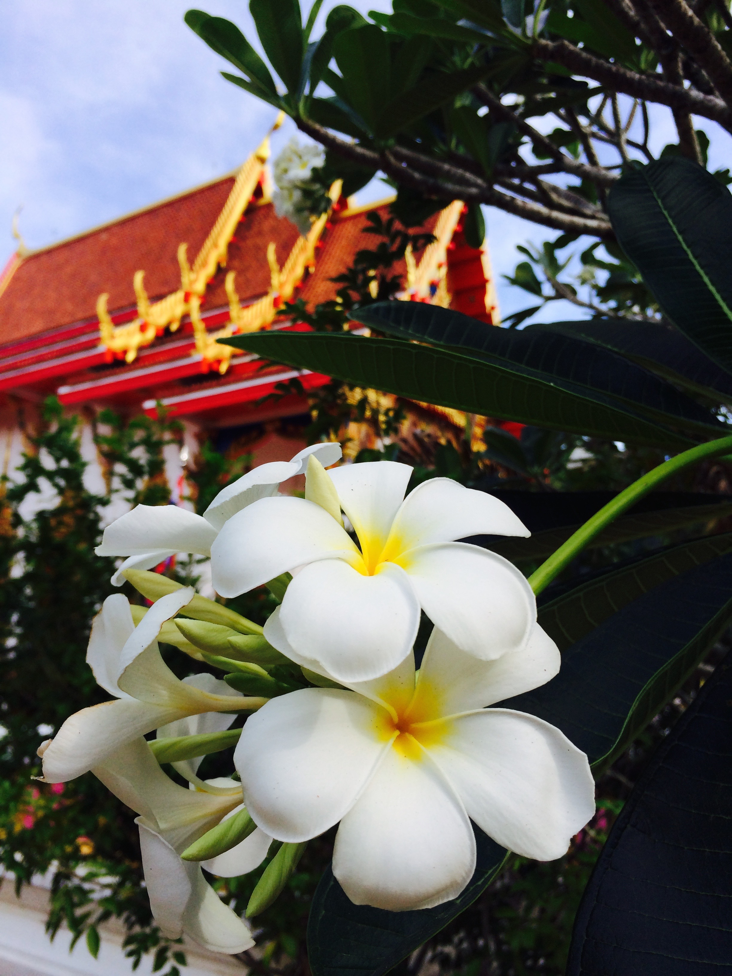 ~Thai Ceremony & Culinary Traditions~