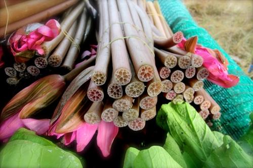 lotus and lotus stems - ดอกบัว และ สายบัว