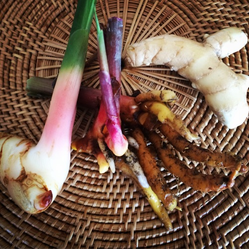 Thai Ginger, Lesser Ginger and White Turmeric